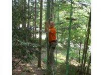 Sur les ateliers de Vercors Forest