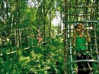 Les parcours dans les arbres pour les niveaux a Lyon Ste Foy