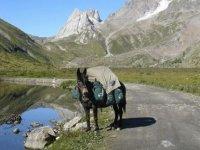 Les mules