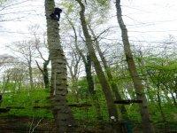 escal'arbre