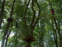 Des aventures uniques a la come des arbres