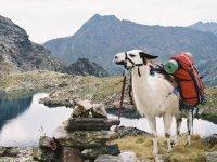 Randonnee avec des lamas