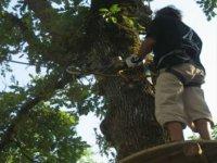 Sur les passerelles dans les arbres