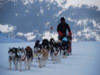 Apprendre a manoeuvrer un traineau a chiens.JPG