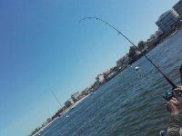 Location de bateau pour pêche