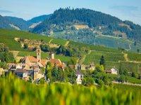 Visite chardonnay