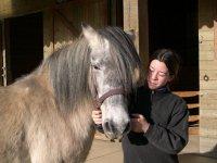Sortie a cheval dans le Morbihan
