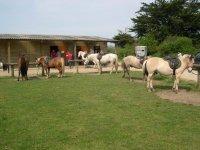 Sur le centre equestre des Highlands