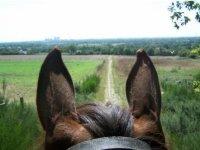 Randonnee equestre en Loire Atlantique