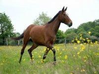 Un cheval de la Cavalerie