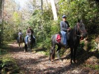 balade equestre en foret