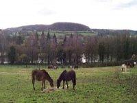 Tourisme Equestre dans le 72
