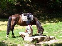 cheval au sud de la Sarthe