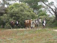 Prestations Equestres