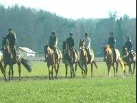 balade equestre en Essonne