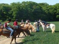 Amoureux de l Equitation