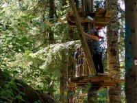 Installations entre les arbres