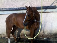 Sorties equestres dans l Ain