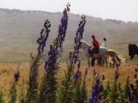 Sortie a cheval pour les jeunes dans la Drome