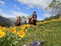 Balade et treks equestres en ete