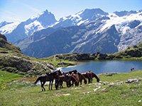 Randonnee equestres dans les Alpes du Sud