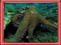Des decouvertes uniques a 20 000 lieux sous les mers