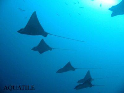 Aquatile Plongée