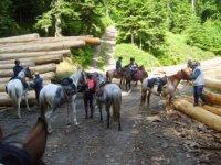 pause pour les chevaux et les cavaliers