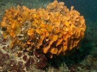 Flore sous marine