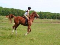 randonnee a cheval pres de Thones