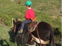 Randonnée Equestre âne