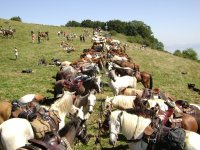 Rallyes et rassemblements equestres