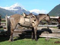 Voyage Equestre en Argentine