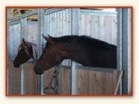 Pension cheval