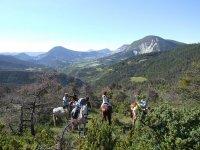 Cheval dans les Alpes de Haute Provence