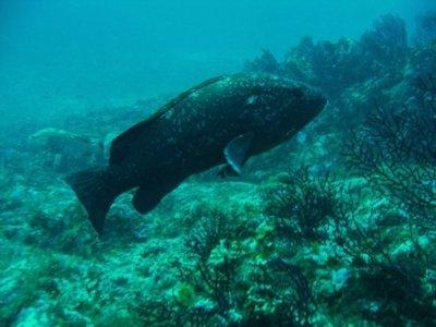 Ascul Plongée Sous-Marine