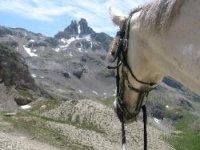 Cheval dans la vallee de la Durance