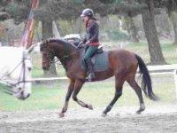 Equitation sportive