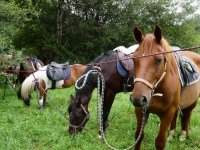 Randonnee equestre en bivouac