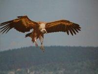 magie du vol avec les vautours