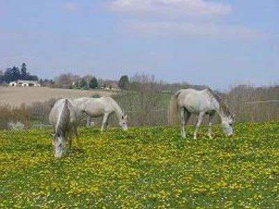 Ferme Equestre Le Cros