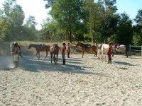 Cours Equestre en Dordogne
