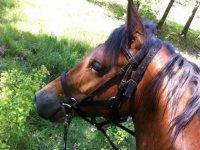 Cheval du Horse Club de Bordeaux