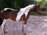 Faire des sorties equestres avec le horse club