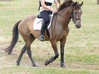 Monter a cheval a Bordeaux
