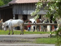 Cheval au centre et cours equitation enfant