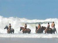 Stage à deux vitesses - perfectionnement le matin, extérieur foret plage après midi !