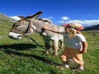 Balades a dos d anes avec Jennif Air Randonnees Equestres
