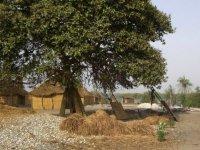 Sortie equestre au Senegal