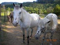 Aventure a cheval dans le gard avec La Mouline